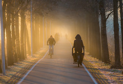 Cold winter morning (Bart Weerdenburg) Tags: utrecht winter cold light fog morning sunrise bike bicycle bakfiets road mist chill
