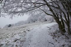 Al San Vicino va in scena la galaverna (EmozionInUnClick - l'Avventuriero's photos) Tags: albero galaverna montesanvicino neve sentiero