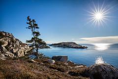 1 degree Celcius and sunny at Polly's Cove (Nancy Rose) Tags: tree barren rocks shoeline atlantic pollyscove nearpeggyscove novascotia hiking trail sunflare sun winter cold 6094