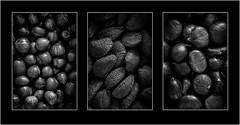 Go Nuts! (Linton Snapper) Tags: triptych nuts brazil hazel chesnuts blackandwhite stilllife canon lintonsnapper
