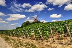 moulin de Verzenay TONE MAPPED (gabard.nadege) Tags: moulin de verzenay 51 marne reims vignes