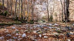 Val Fondillo _ Opi Parco Nazionale d'Abruzzo e Molise (andybot2012) Tags: autmn paesaggidabruzzo abruzzo