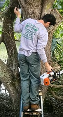 Man up a tree (LarryJay99 ) Tags: neck man work male dude nape trees sunglasses dudes guys guy backside sunshades unsuspecting cuteguy backs men candid back shoulders latino malebacks iphone7plusbackdualcamera66mmf28