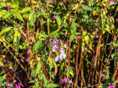 Blumen am Bahc