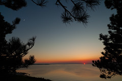 Rising moon (Jakob Arnholtz) Tags: ordrupns arnholtz denmark danmark solnedgang sunset spring forr silhouette fyrretr