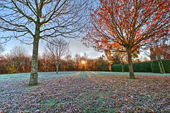 Autumn sunrise (Aliy) Tags: chestfield kent autumn autumnal wintery cold frosty sunrise park playpark playarea leaves fallenleaves tree trees frost winter