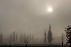 9:55 (Fabin Ortega) Tags: trees sun fog canon arboles niebla t2i