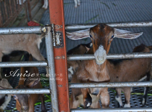 宜農牧場_045.jpg