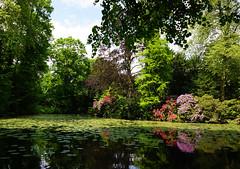 Fairy tale hour (*Gitpix*) Tags: park trees sun lake reflection nature sunshine landscape pond sony natur rhododendron teich landschaft sonne bume spiegelung baum reflektion sonnenschein rhododendrons rhododendren mrchenstunde sel1855 sonynex7 sonysel18551855mm fairytalehour
