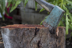 Number 185 of 365 / 2013 - Stop looking at the patterns in the wood!  -  Chop Chop! (MarkFromAdelaide) Tags: mark voodoo choppingblock woodcutter day185 woodchop voodoophotography day185365 number185 3652013 365the2013edition markfromadelaide axeinwood number185of365 04jul13