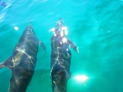 IMG_2456 (aurora borealis lover1555) Tags: beauty mexico dolphin dolphins boating tropical bajacalifornia bajacaliforniasur bajasur loreto tropics seaofcortez carmenisland mexicodolphins loretobaja