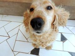My dog, my life (Alxia Zyom) Tags: dog love animal cachorro