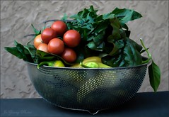 Bounty Of The Season (Jo Zimny Photos) Tags: fall tomatoes harvest watercolour basil peppers produce collander morningphotos
