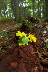 Leaf study (Through Bri`s Lens) Tags: uk autumn england fall leaves sussex leaf log woods logs ashurst polariser canon1740f4l canon7d