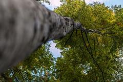 Etang des Moines (smashingraph) Tags: forest switzerland suisse fort etang chserex etangdesmoines