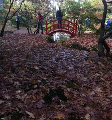 poseren. (Sytske_R) Tags: park tuin brug rood landschap clingendael japansetuin landgoedclingendael