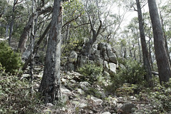Mount Freycinet Track