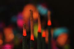 Incense sticks (Tony Dias 7) Tags: row macromondays