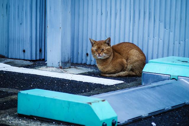 Today's Cat@2013-11-11