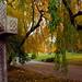 """Cincinnati – Spring Grove Cemetery & Arboretum """"The Autumn Road Home"""""""
