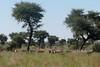 Namibia Safari - Lake Lodge 30