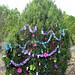 Trees_of_Loop_360_2013_078
