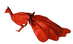 Peacock (Neal Elias) (Danielle Verbeeten) Tags: bird art paper origami elias peacock papier paperfolding papiroflexia folding pauw vouwen vouwkunst nealelias papierkunst papiervouwen danielleverbeeten
