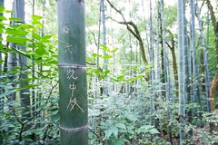 Bam, Boo! Message for You! (Universal Stopping Point) Tags: china green nature carved message chinese carving bamboo characters lettering foreign lushan bambooforest jiangxi