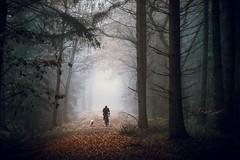 Wildenloh (derScheuch) Tags: autumn trees winter dog mist fall leaves bike fog germany deutschland dof nebel minolta sony herbst hund alpha makro wald bltter 900 oldenburg dunst ammerland wildenloh bume friedrichsfeh