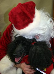 "Fwd: therapy dog for Santa Claus • <a style=""font-size:0.8em;"" href=""https://www.flickr.com/photos/79036902@N02/11785161406/"" target=""_blank"">View on Flickr</a>"