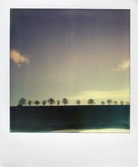 (teacup_dreams) Tags: project landscape polaroid impossible keele