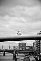 londra mon amour LXXVIII - palaces  and stormclouds (Bernardo Marchetti) Tags: bridge white black london tower thames clouds poser cloudy seagull south bridges bank millennium londra