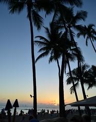 Waikiki Silhouette (Jason Fairbairn Photography) Tags: usa silhouette hawaii evening waikiki dusk palm palmtrees waikikisunset