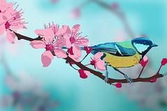 bird_blossom mock up (ochre7) Tags: pink blue bird yellow illustration digital photoshop cherry tit blossom mockup ochre7