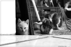 Chats Perdu / Cats Lost (Bruno Hoarau) Tags: saint canon 350d 1 louis chat noir noiretblanc 4 8 ile nb mm 50 et poil blanc optique runion perdu pattes 974