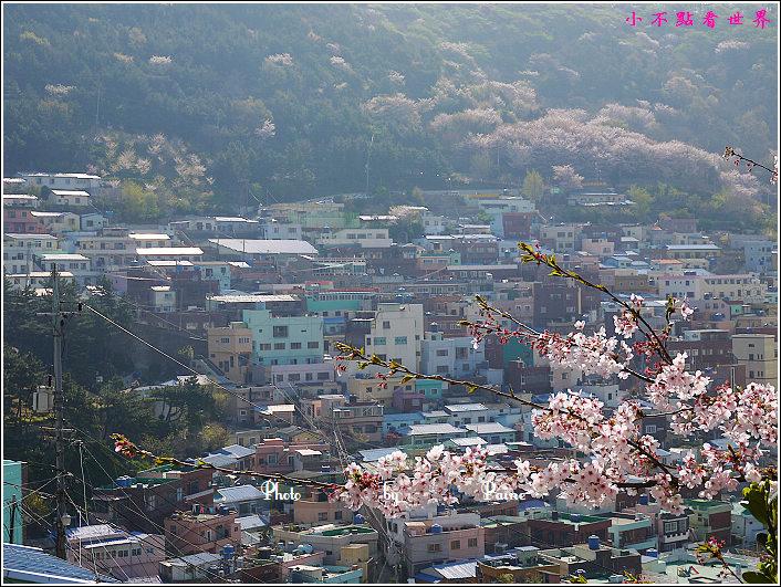 釜山甘川洞 (666).jpg