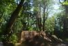 DSC_3354 (=zephyr=) Tags: seattle film june is washington cool nikon bmx trails bellingham but shire jam 16mm d800 2015 fisheeye