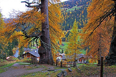 Ultental_St_Gertraude01 (Vid Pogacnik) Tags: italy italia autumn plant tree colours larch village outdoor
