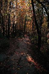 7Q7A6202 (armincreates) Tags: nature fall colors trees lake mountains hike dog puppy beauty trail panorama sunset cows farm wisconsin illinois usa walk