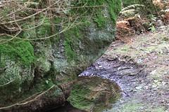 IMGL8108 (harleyxxl) Tags: klosterberg bach waldviertel natur langschlag spiegelung
