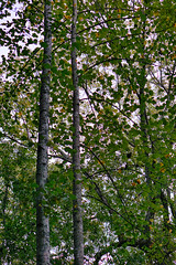 DSC05380-82_HDR (Capt Kodak) Tags: autumn chattahoocheerivernationalrecreationarea fall hdrefexpro2 madefrom3images medlockbridgepark nationalparkservice nikcollectionbygoogle niksoftware photomerge