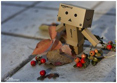 Autumn (... Pit ) Tags: autumn danbo toy toys toypictures toyphotos quotes october life lifestyle danboard