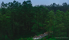 Munnar-Travel Dairies (dtrajan) Tags: estates evening hillstation kerala munnar nature beauty bliss bushes colors dawn fog ghats green greens india landscape light matte mist mountains outdoor photography scenic skies south sunset view westernghats