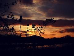 Tonight's sunset (Squatbetty) Tags: kivetoncommunitywoodland kivetonpark silhouette