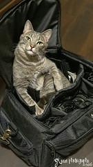 xE_20160519_220859 (lakeglenmiss) Tags: cat camerabag
