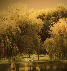 Memories at the Unexpected Pond (garlandcannon) Tags: romance autumn goldenlight albumpark awardtree