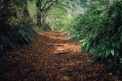 A walk in the woods (Nige H (Thanks for 6.5m views)) Tags: nature landscape woods forest woodland walkinthewoods somerset cheddar cheddarwoods england autumn trees leaves autumnleaves