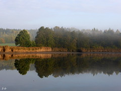 a pond like a mirrow (S.Garten) Tags: water pond mirrow trees fog grass