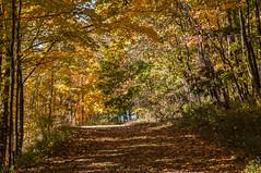 Waywayanda Autumn_4988 (smack53) Tags: smack53 waywayandastatepark newjerseystatepark trees autumn autumncolors fall fallcolors fallseason foliage vernon newjersey nikon d300 nikond300
