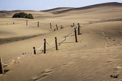 Canary Islands (tim_asato) Tags: timasato canaryislands islascanarias dunas dunes sand arena grains desert desierto granos postes cuerda time tiempo
